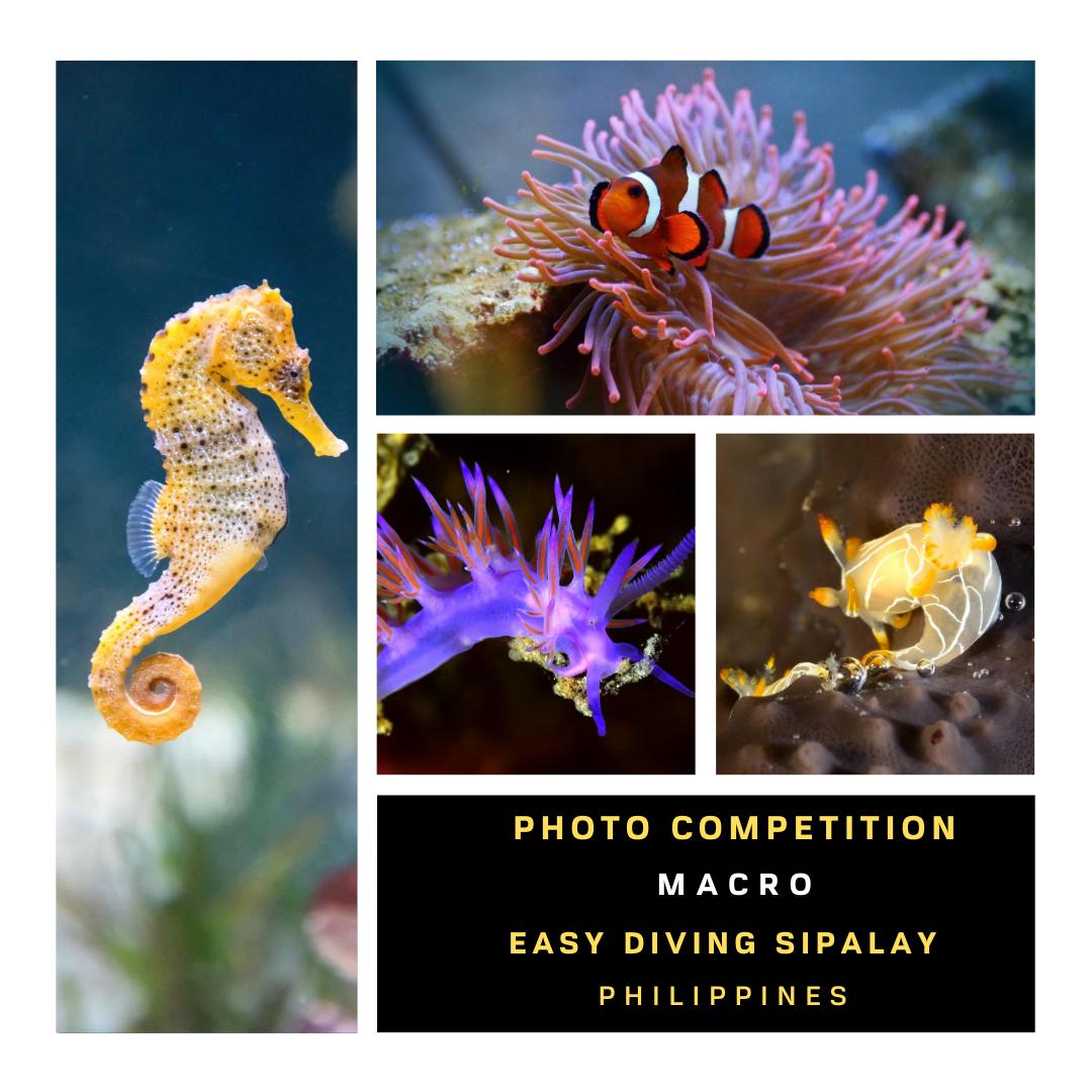 Foto Wettbewerb